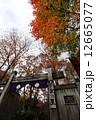 秋の平家の里 12665077