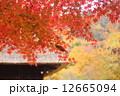 秋の平家の里 12665094