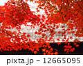 秋の平家の里 12665095
