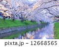 桜並木 桜 小川の写真 12668565