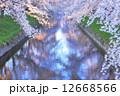 桜並木 桜 小川の写真 12668566