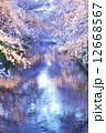 桜並木 桜 小川の写真 12668567