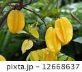 熱帯果実 スターフルーツ フルーツの写真 12668637