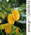 熱帯果実 スターフルーツ フルーツの写真 12668638