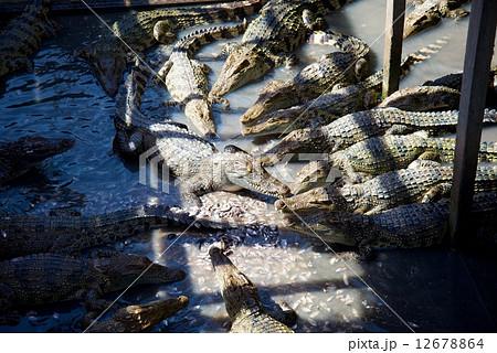 カンボジア トレンサップ湖 12678864