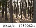 針葉樹の森 12690821