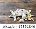 ヒトデと貝殻 12691840