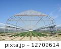ハウス 野菜畑 畑の写真 12709614