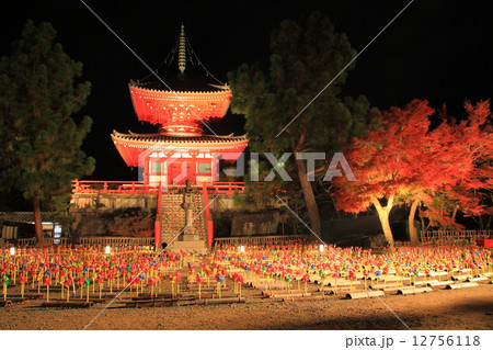 紅葉ライトアップの大覚寺大沢池 12756118