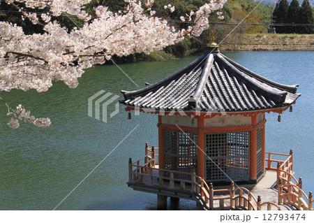 岡山県 安養寺 浮見堂と春 12793474