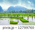 農業 農耕 アジア圏の写真 12799760