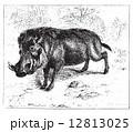 彫り物 ビンテージ イボイノシシのイラスト 12813025