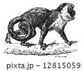 さる サル 猿のイラスト 12815059