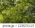 木漏れ日 12823113