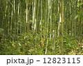 竹林 12823115
