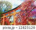 平野神社 鳥居 絵画風 12823120