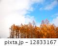 雑木林 群生林 紅葉の写真 12833167