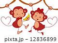 動物 さる サルのイラスト 12836899