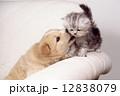 仔犬 犬 猫の写真 12838079