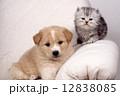 仔犬 犬 猫の写真 12838085