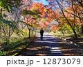 船尾滝への散歩道 12873079