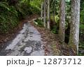 林道 道 山道の写真 12873712