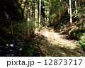 山道 林道 道の写真 12873717