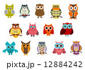 Cartoon cute owl birds 12884242