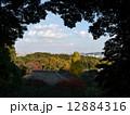 東京都心 百草園 紅葉の写真 12884316