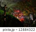 百草園 紅葉 ライトアップの写真 12884322