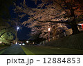 高松の池 夜桜 ライトアップの写真 12884853