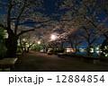 夜桜 高松の池 ライトアップの写真 12884854