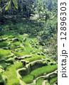 農地 ライステラス バリ島の写真 12896303