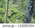 農地 ライステラス バリ島の写真 12896304