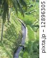 農地 ライステラス バリ島の写真 12896305
