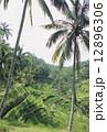 農地 ライステラス バリ島の写真 12896306
