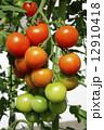 夏野菜 中玉トマト 生野菜の写真 12910418