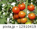 夏野菜 中玉トマト 生野菜の写真 12910419