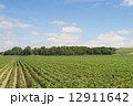 大豆畑 12911642