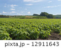 大豆畑 12911643