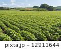 大豆畑 12911644