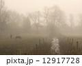 霧 馬 モーニングの写真 12917728