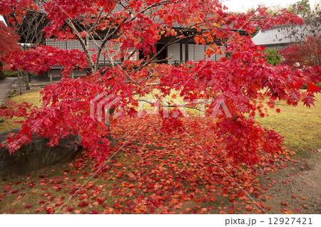 秋景色 京都 勧修寺 12927421