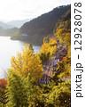 湖畔沿いの黄葉 12928078