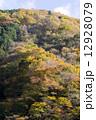 山の斜面の黄葉 12928079