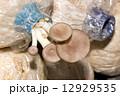秋 釦 ブラウンの写真 12929535