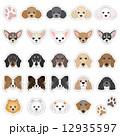 犬の顔のイラスト 12935597