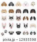 犬の顔のイラスト 12935598