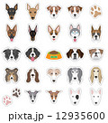 犬の顔のイラスト 12935600