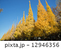 銀杏並木 秋 木の写真 12946356